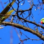 Papageien wohnen im Baumloch