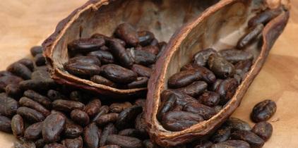 Warum essen Kakaobauern keine Schokolade?